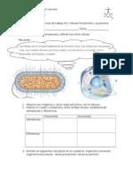 guadetrabajon2celulasprocarionteyeucarionte-120908100908-phpapp01.doc