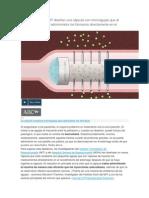nvestigadores del MIT diseñan una cápsula con microagujas que al ingerirla por vía oral admiministra los fármacos directamente en el organismo.docx