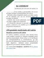 EL CEDRON.docx