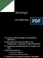 Atlas micología