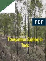 Transpiration Sap Flow in Trees