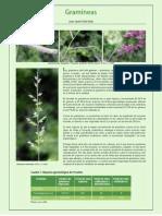 11 Gramineas.pdf
