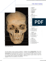 Color Atlas of Anatomy - Page 026 _ Facial Bones.pdf