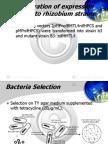 cadmium bioremediation by recombinant bacteria