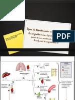 Tipos de hipertensión.pptx
