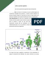 Fenología del cultivo o periodo vegetativo anteproyecto edson.docx