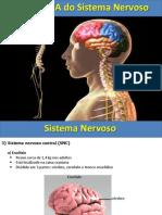 1) AULA DE ANATOMIA  SISTEMA NERVOSO.ppt
