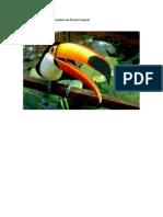 Estudo da fauna brasileira em floresta tropical.pdf