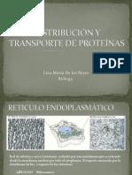 DISTRIBUCIÓN Y TRANSPORTE DE PROTEÍNAS.pdf