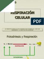 54_13 Resp_celular.ppt
