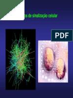 AULA SINALIZAÇÃO I.pdf