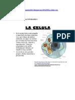 act-celula.docx