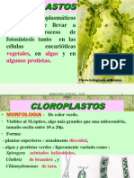 cloroplastos.ppt