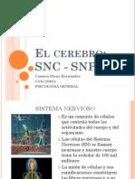 El cerebro SNC SNA.pdf