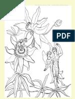 Fairy Tales Activity & Unit Study Colour Pages