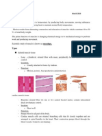 Muscles Notes March 2014.docx