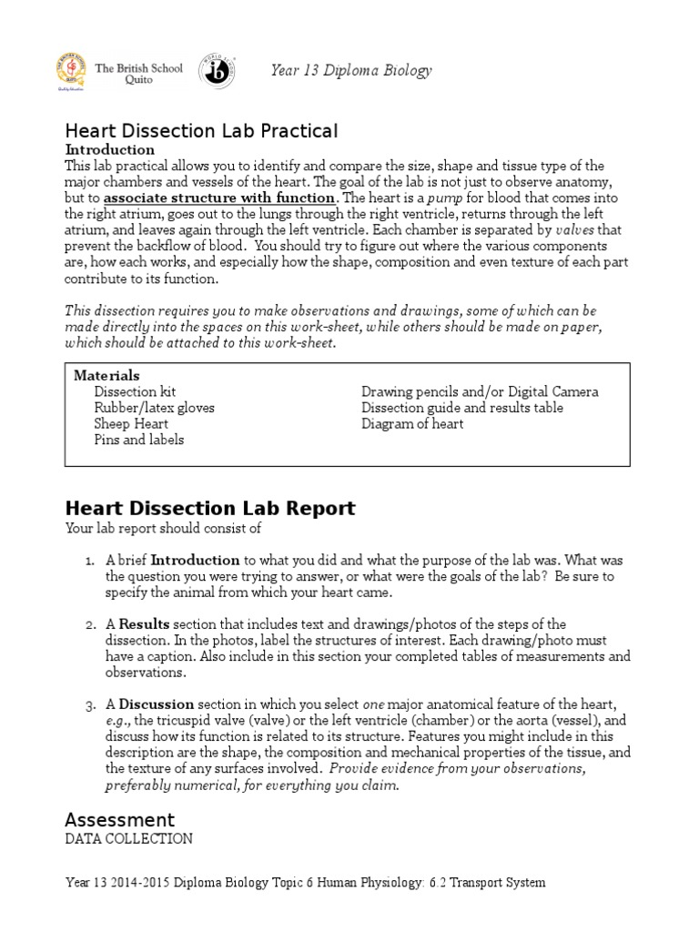 practical report disection sheep heart Procedure b—dissection of a sheep heart 1 11 complete your lab report sheep heart dissection lab name_____ anatomy & physiology.