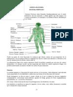 Anexo_Anatomia.pdf