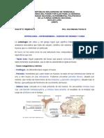 GUIA 2 Osteologia.doc