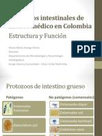 JUNIO 3-Protozoos intestinales de interés médico en Colombia.pdf