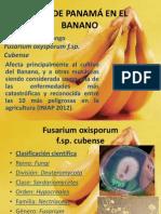 MAL DE PANAMÁ EN EL BANANO.pptx