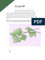 Cómo cultivar perejil.docx