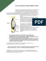 Los desequilibrios musculares según Vladimir Janda.docx