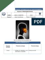 GUIA N 7.pdf