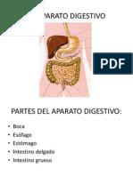 EL APARATO DIGESTIVO.ppt