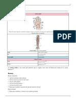 Arteria radial.pdf