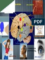 mapa mental corteza.pptx