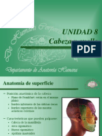 Anatomia Superficie.ppt