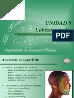 Anatomia Superficie.ppt