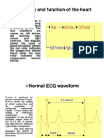 ECG Anatomy