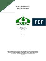 VISUM PL PD.doc