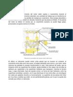 sistema Lubricación.docx