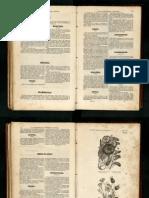 convolvulus_libro.pdf