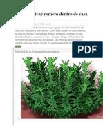 Cómo cultivar romero dentro de casa.docx