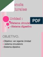 5º Basico.pptx