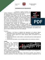 Macromoleculas.pdf