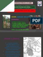 PUEBLO AMAZONICO.pptx