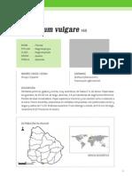 Foeniculum_vulgare_i.pdf