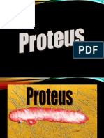 proteus-119864070326470-5.ppt