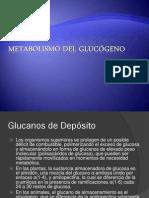 5-MetabolismodelGlucogeno.pdf
