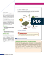 CiclodevidaNaranjo.pdf