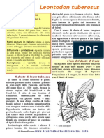 leontodon tuberosus