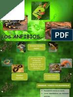 ALBUM ANFIBIOS.pdf