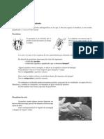EJERCICIOS PARASITISMO, COMPETENCIA Y PREDACIÓN.pdf