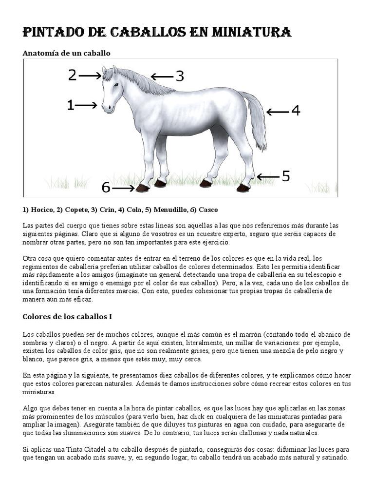 Moderno Ver Grises Guía Primewire Línea Anatomía Ideas - Imágenes de ...