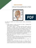 Conducto del epidídimo.docx